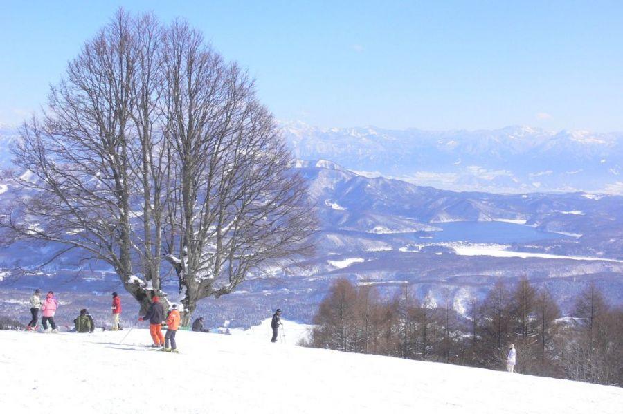 スキー 杉 ノ 場 原