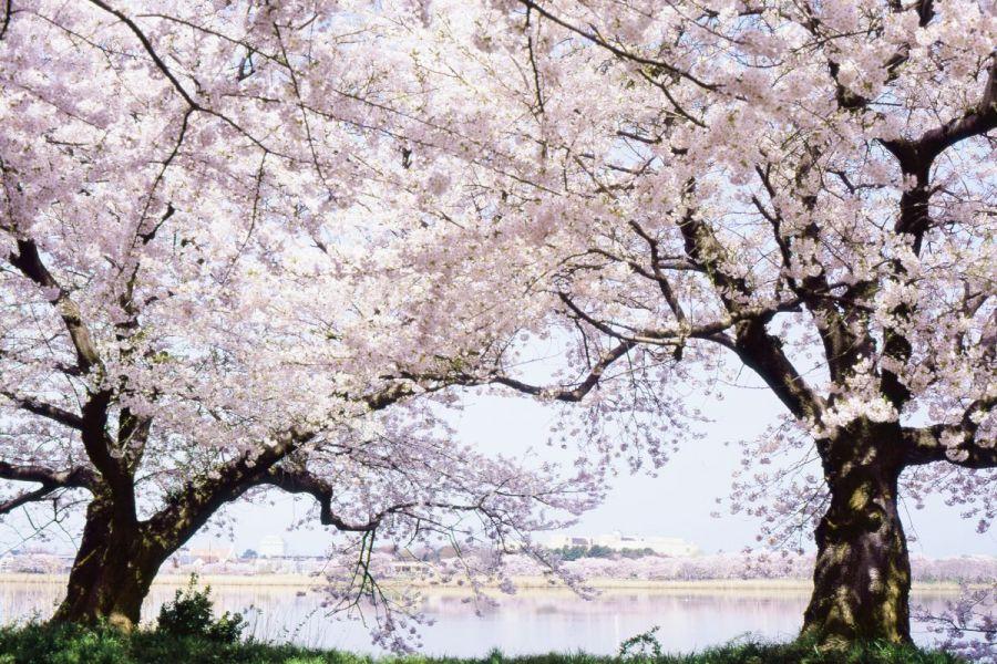 鳥屋野潟 新潟の観光スポット 【公式】新潟県のおすすめ観光・旅行 ...