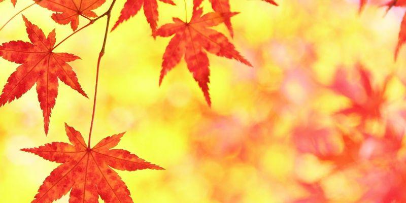 秋の季節情報|旅のテーマで探す...